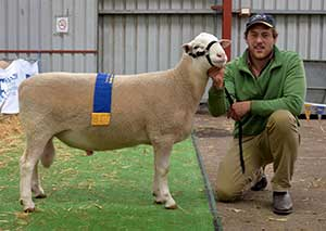 Sheepvention Anden Senior Champion Ram