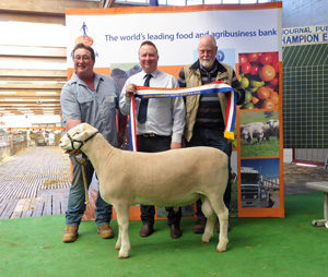 Grand Champion White Suffolk Adelaide Rotal Show 2019